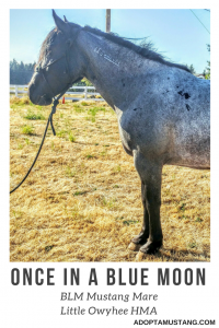 Little Owyhee HMA - Blue Roan