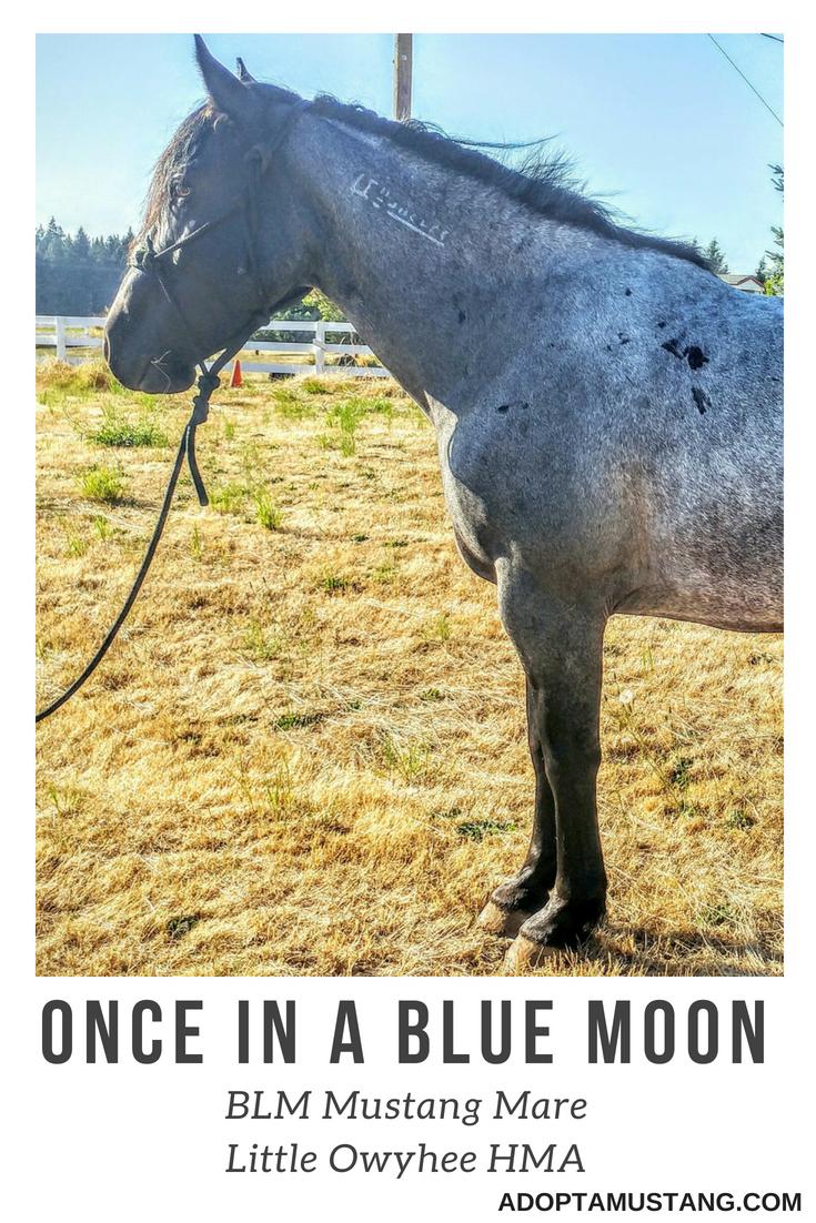Little Owyhee HMA - Blue Roan