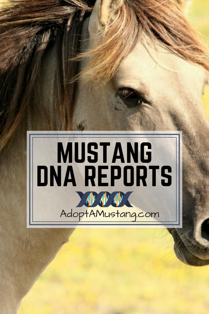Mustang DNA Report