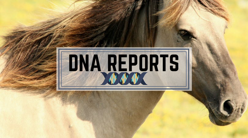 Horse DNA Reports