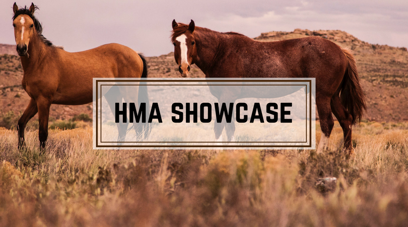 HMA Showcase