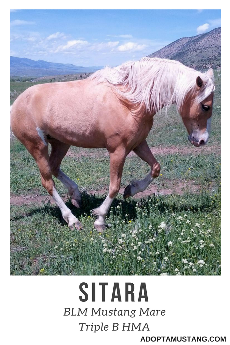 Sitara - BLM Mustang from Triple B HMA