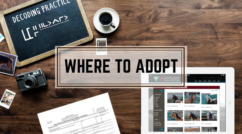 Where to Adopt