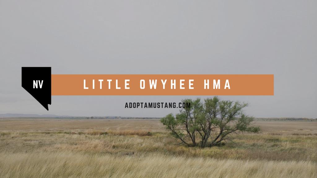Little owyhee NV HMA