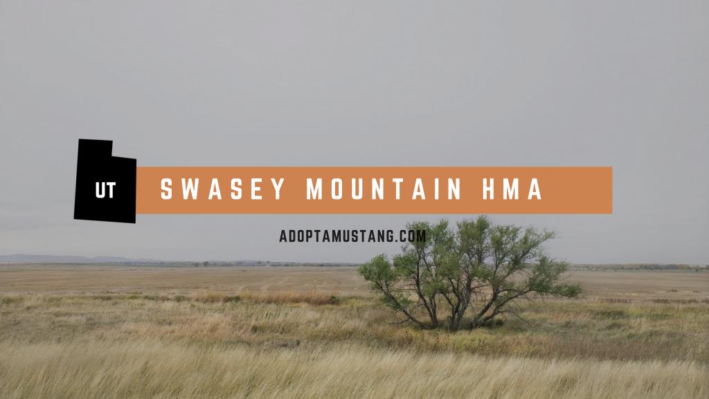 Swasey Mountain HMA