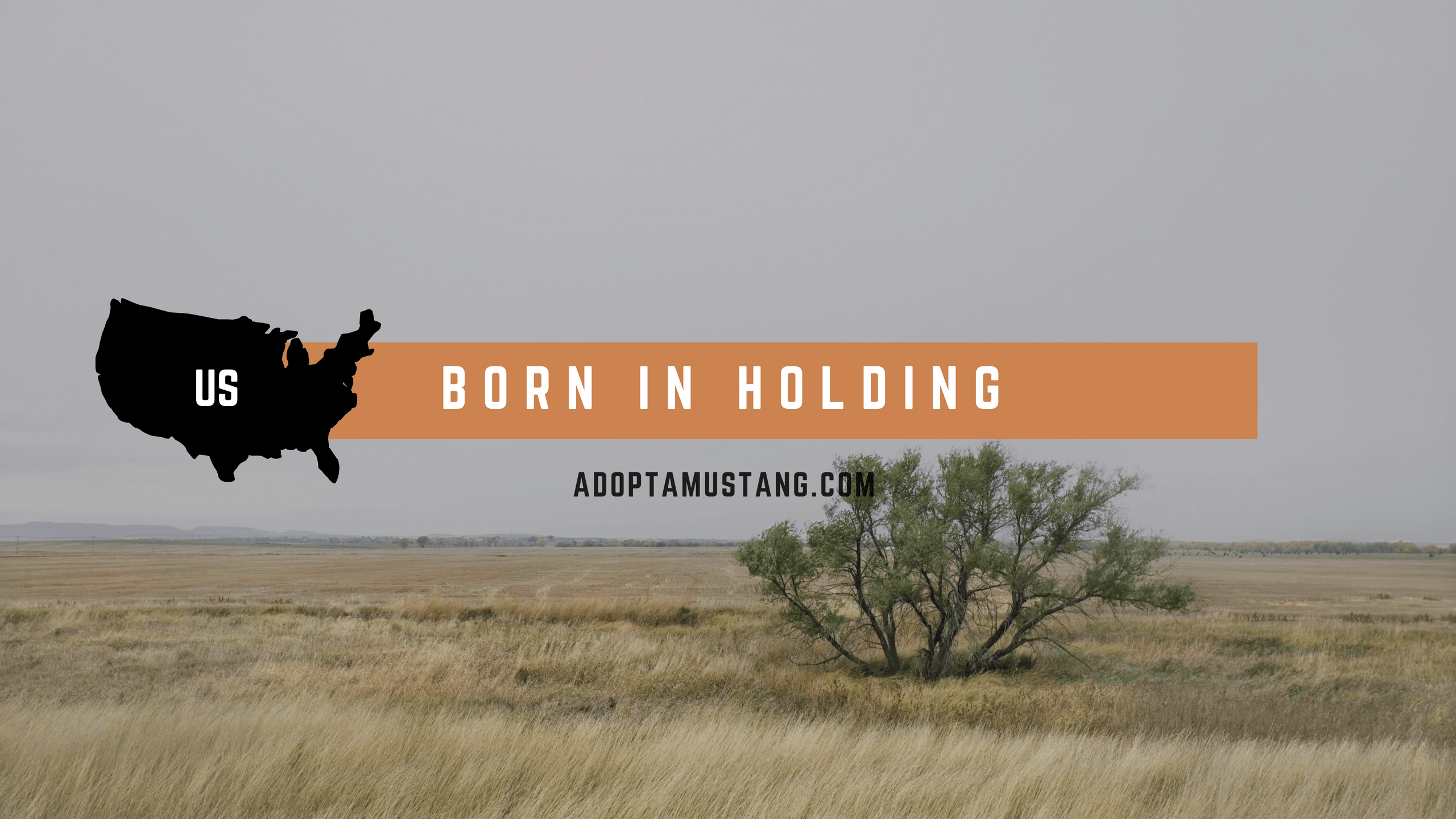 Born in Holding
