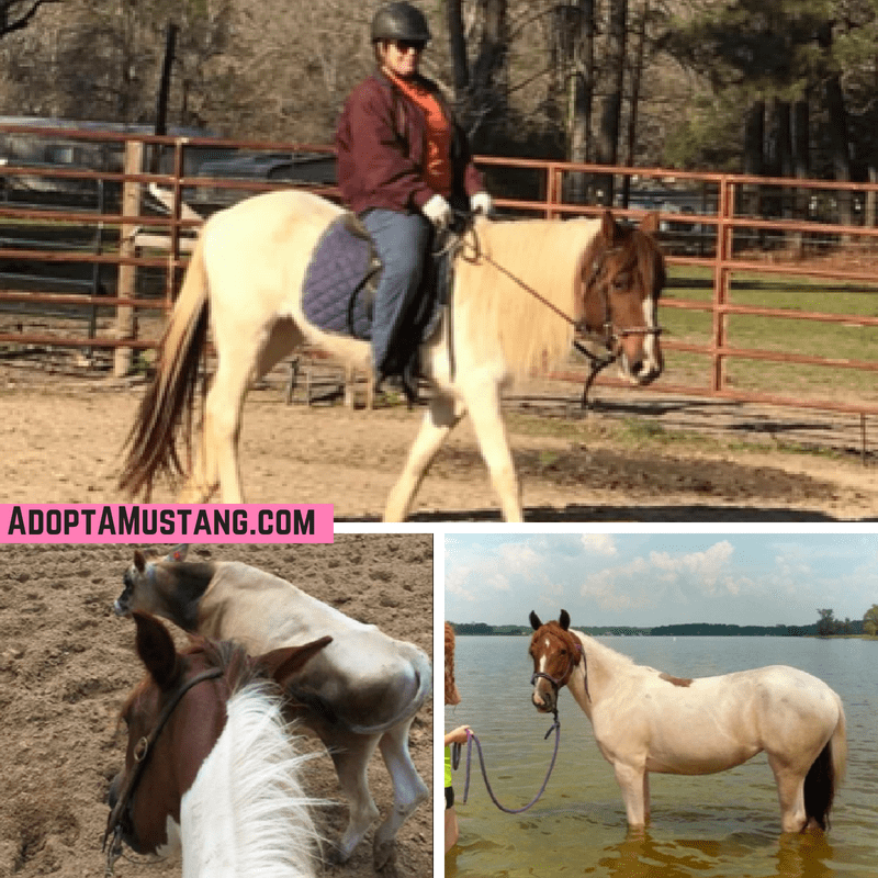 Journey - BLM Mare - Born at Pauls Valley