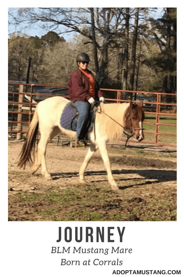 Journey - Born In Facility