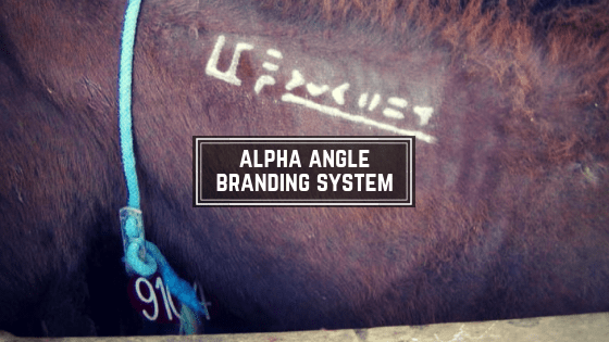Alpha Angle Branding System for BLM Mustangs