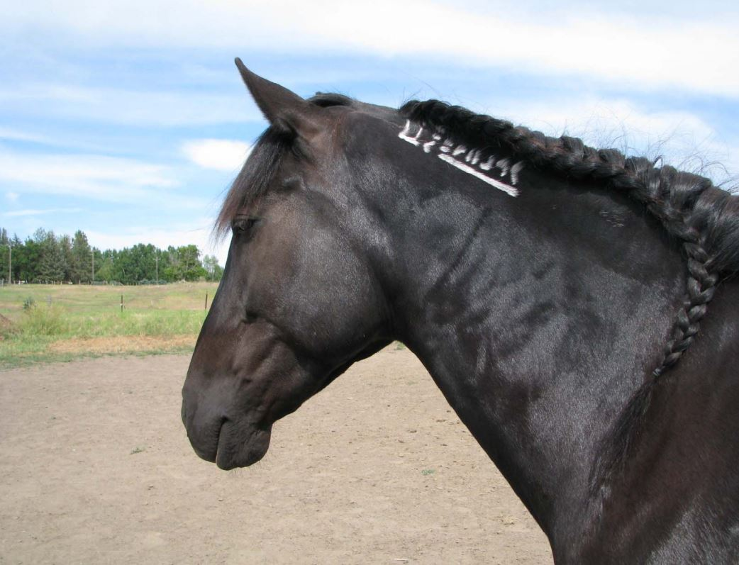 blm horse freeze brand
